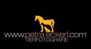 Tierfotogrfie, Petra Eckerl