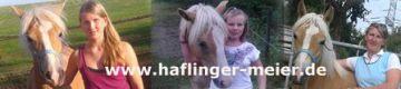 Haflinger Meier