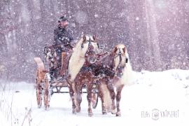 Haflinger, Luber, Kutsche, Schnee