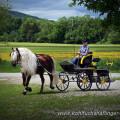 dunkler Haflinger, außergewöhnliche haflinger, kutschfahrten, Sandra Luber, one-horse carriage, lange Mähne
