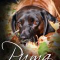 Hundedame Puma von Sandra Luber, Foto: Bettina Niedermayr, Kohlfuchshaflinger Luber Sandra, Berching, Pollanten