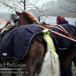 Berchinger Rossmarkt 2014, Haflinger Hengst liz. Steiermark, Stoffl, Sandra Luber,