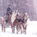 Winter Wonderland, Ungarischer Jagdwagen mit Haflinger, Sandra Luber, Pollanten