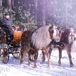 Haflinger Zweispänner, Schnee, Sandra Luber, Pollanten