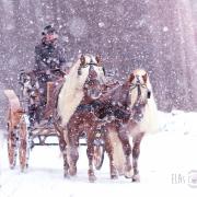 Haflinger Luber, Zweispänner, Kutsche, Ungarischer Jagdwagen