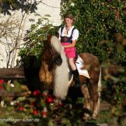 Haflinger Luber - Dechhengst liz. Steiermark mit Sandra Luber aus Berching, Pollanten
