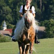 Auf dem Rücken der Pferde, liegt das Glück dieser Erde. Haflinger Luber, Berching, Pollanten
